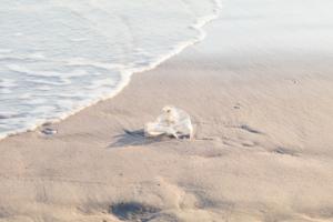 used plastic bag on the beach